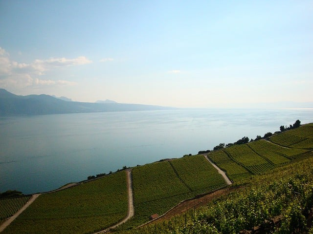 Tour de Suisse, a.k.a. Wines of Switzerland