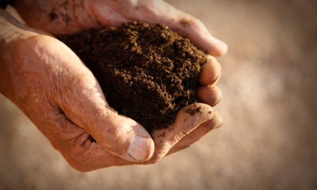 Four distinct soil types behind some of the world's greatest wines.