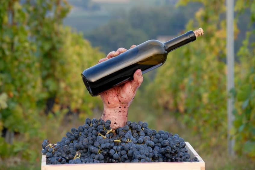 5 Wine Careers to Consider with a Wine Certification