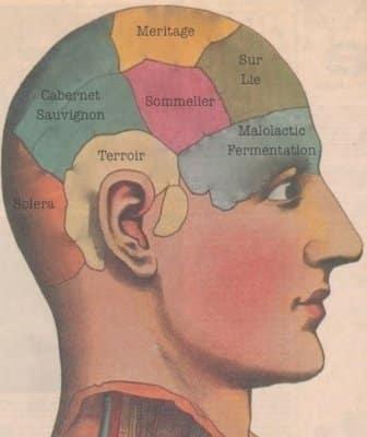 Brain of Wine