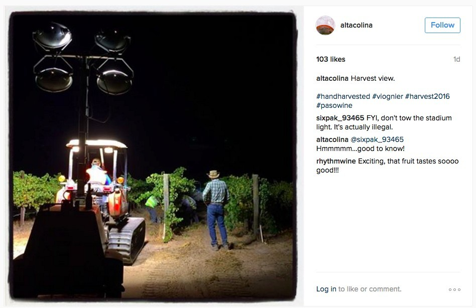 Alta Colina Night Picking