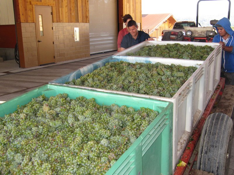 Harvest Begins in Paso Robles Wine Country