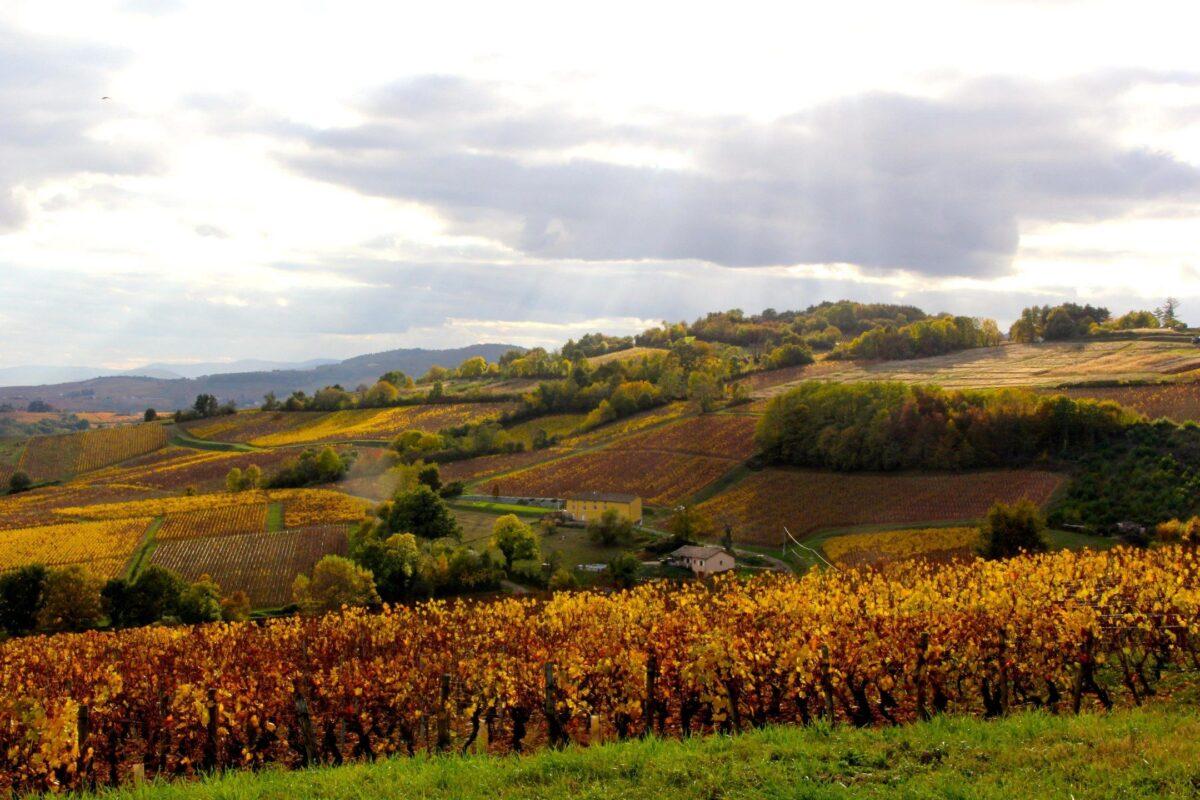 Mâconnais looking down to Beaujolais